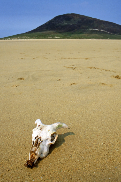 Goat Skull - Ceapabhal, Isle of Harris, Scotland, UK - May 22, 1989