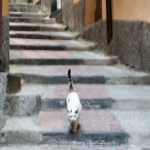 Cat - Vernazza, La Spezia, Italy - August 29, 2015