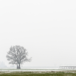 Lonely Tree - Reggio Emilia, Italy - March 1, 2018
