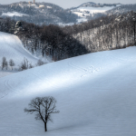Lonely Tree - Carpineti, Reggio Emilia, Italy - February 5, 2012